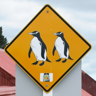 Oamaru Blue Penguins