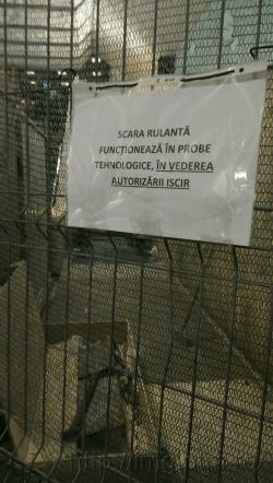 scara-rulanta-dristor-10-decembrie-iscir