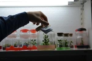"""A """"Start-up"""" está instalada na incubadora da UTAD / Foto: Salomé Ferreira"""