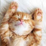 13 ways to help your writing by catching more ZZZZZs…