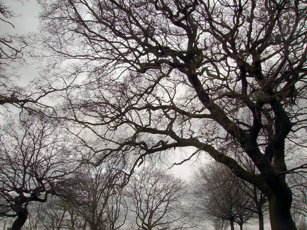 Image result for tree branches