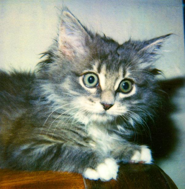 Intenso gatito