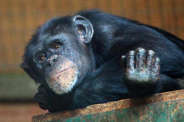 Relajantes mono