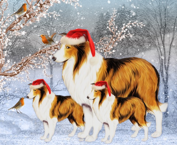 Winter Collie Dog And Puppy Free Stock Photo Public