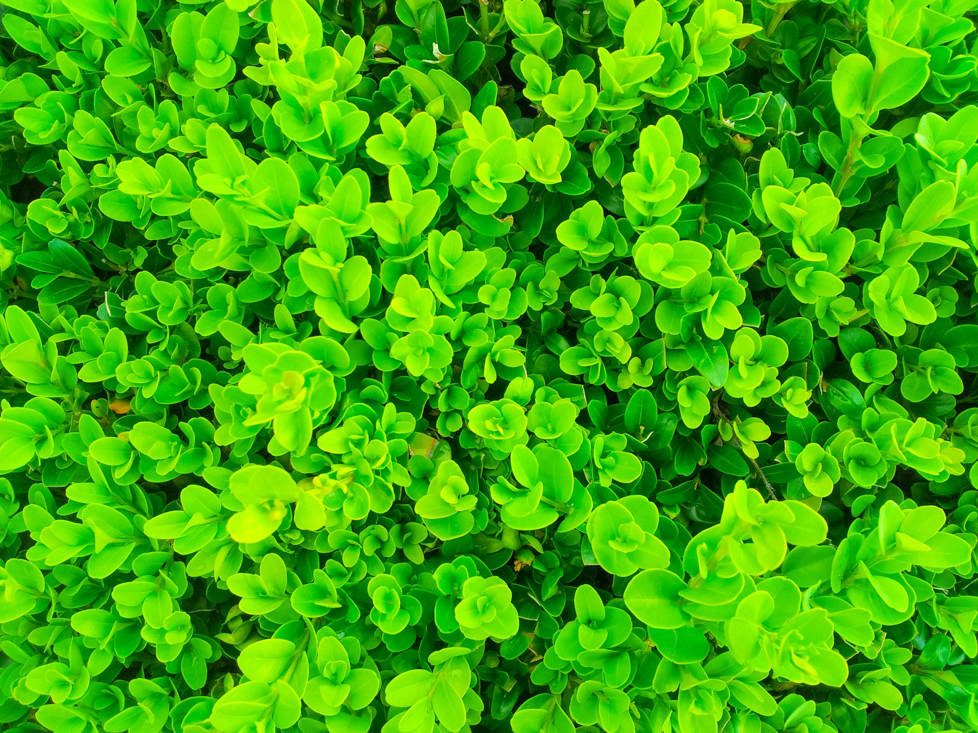 Green Plants Pattern Free Stock Photo Public Domain Pictures