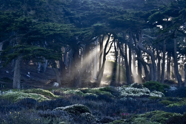 Rays Of Sun Through Trees