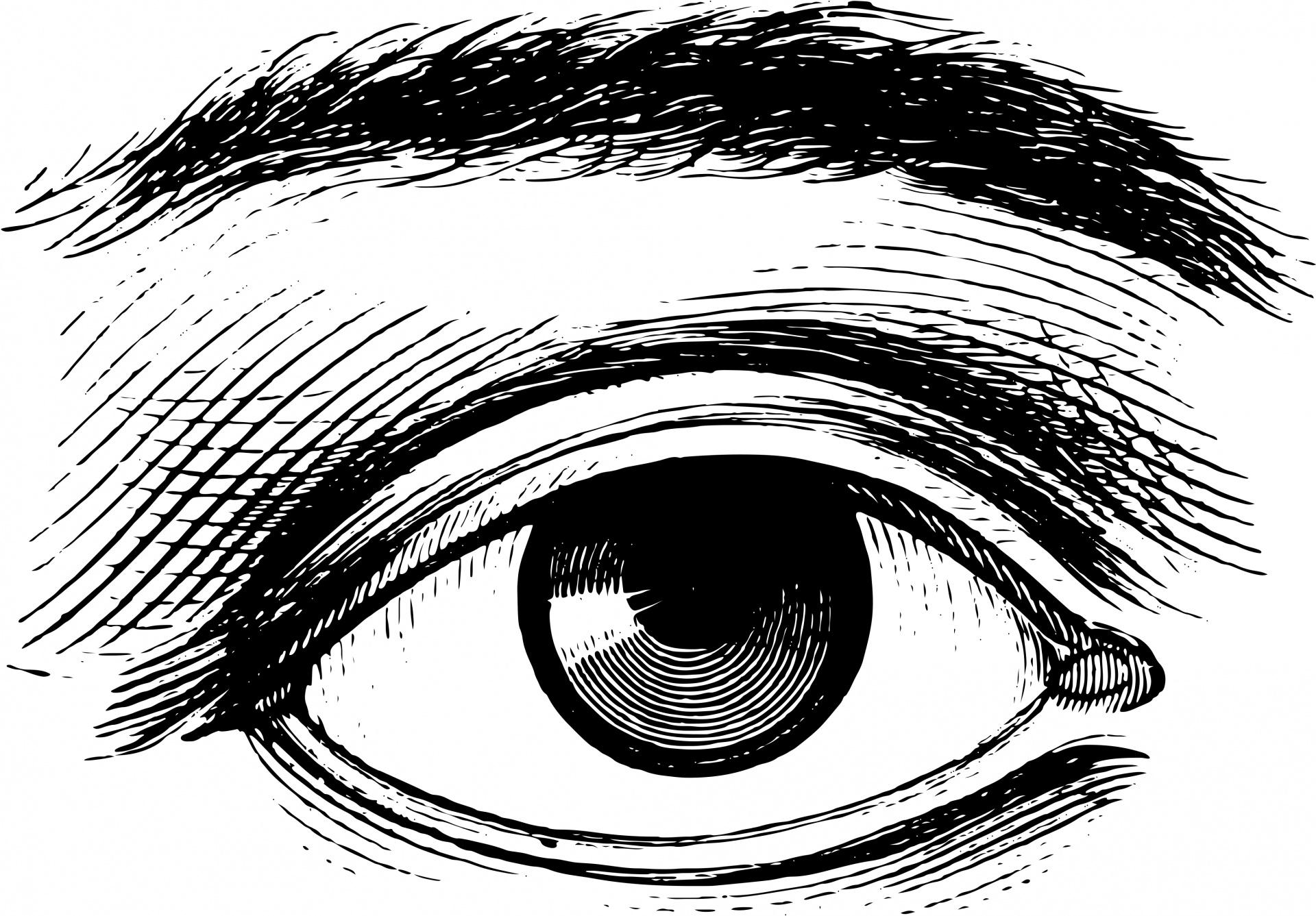Human Eye Free Stock Photo