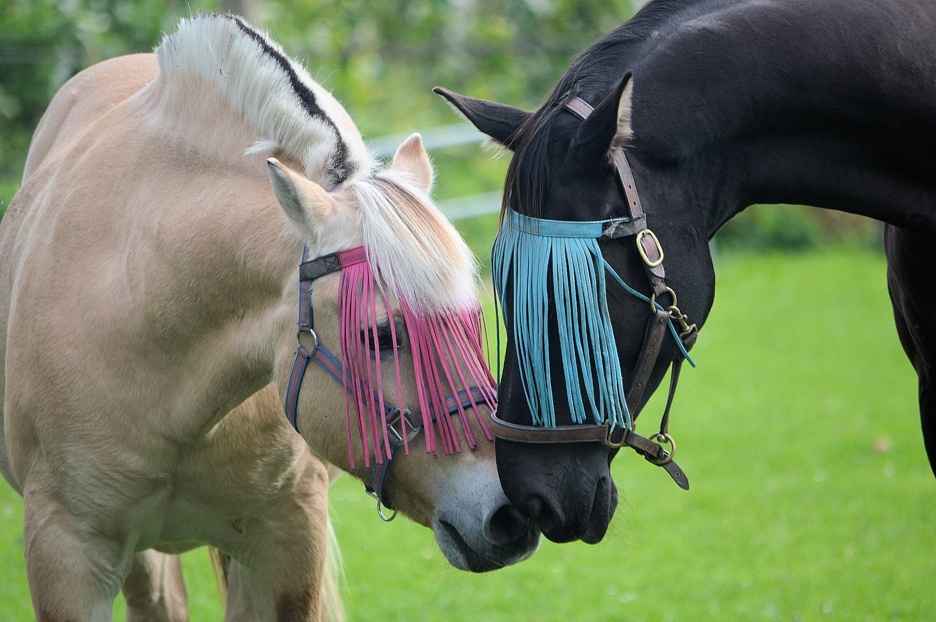 Horses, Life is Beautiful