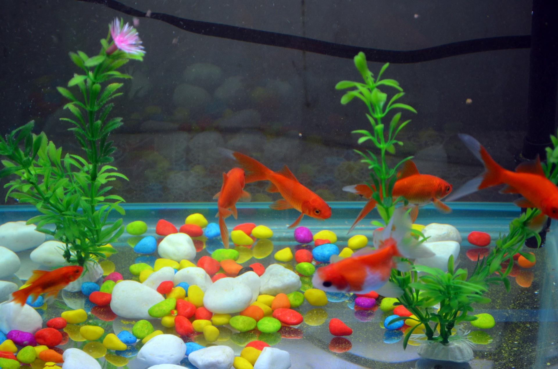 Imagini pentru fish aquarium