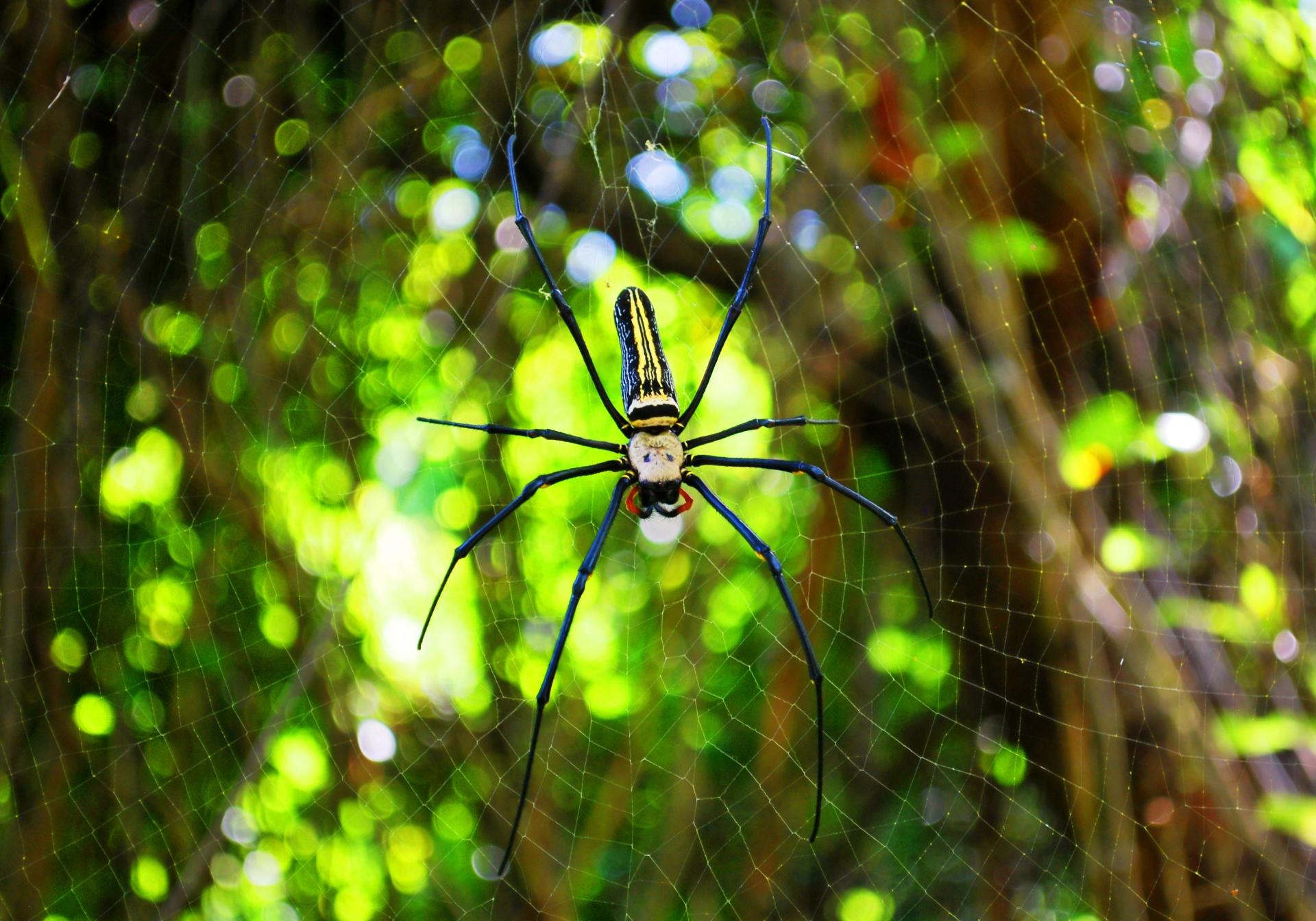 Arachnid, National Be Kind To Spiders Week, Spiders