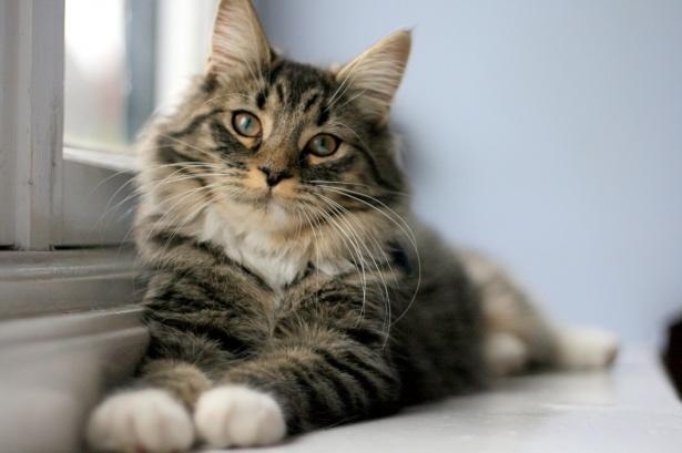 Image result for Cat behavior training public domain