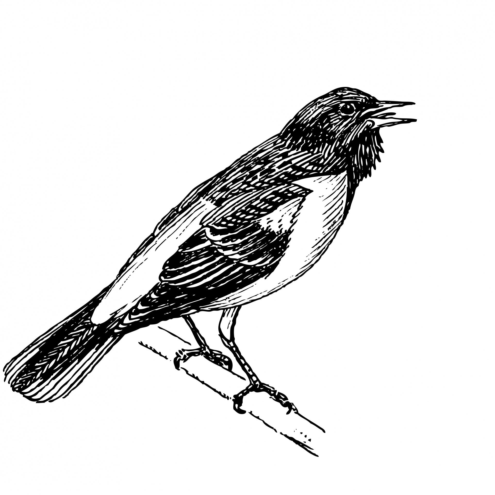 Bird Clipart Illustration Free Stock Photo