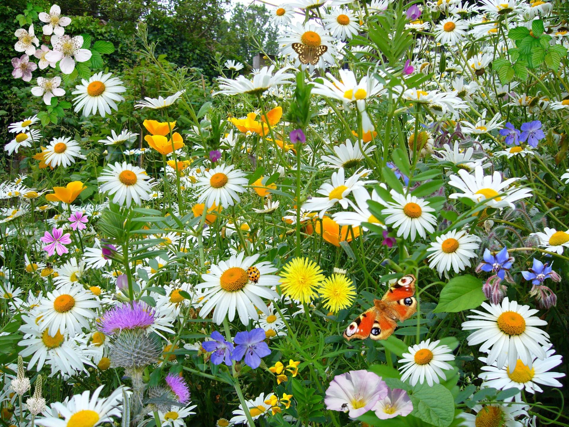 Nature, Flowers, Wild Flowers