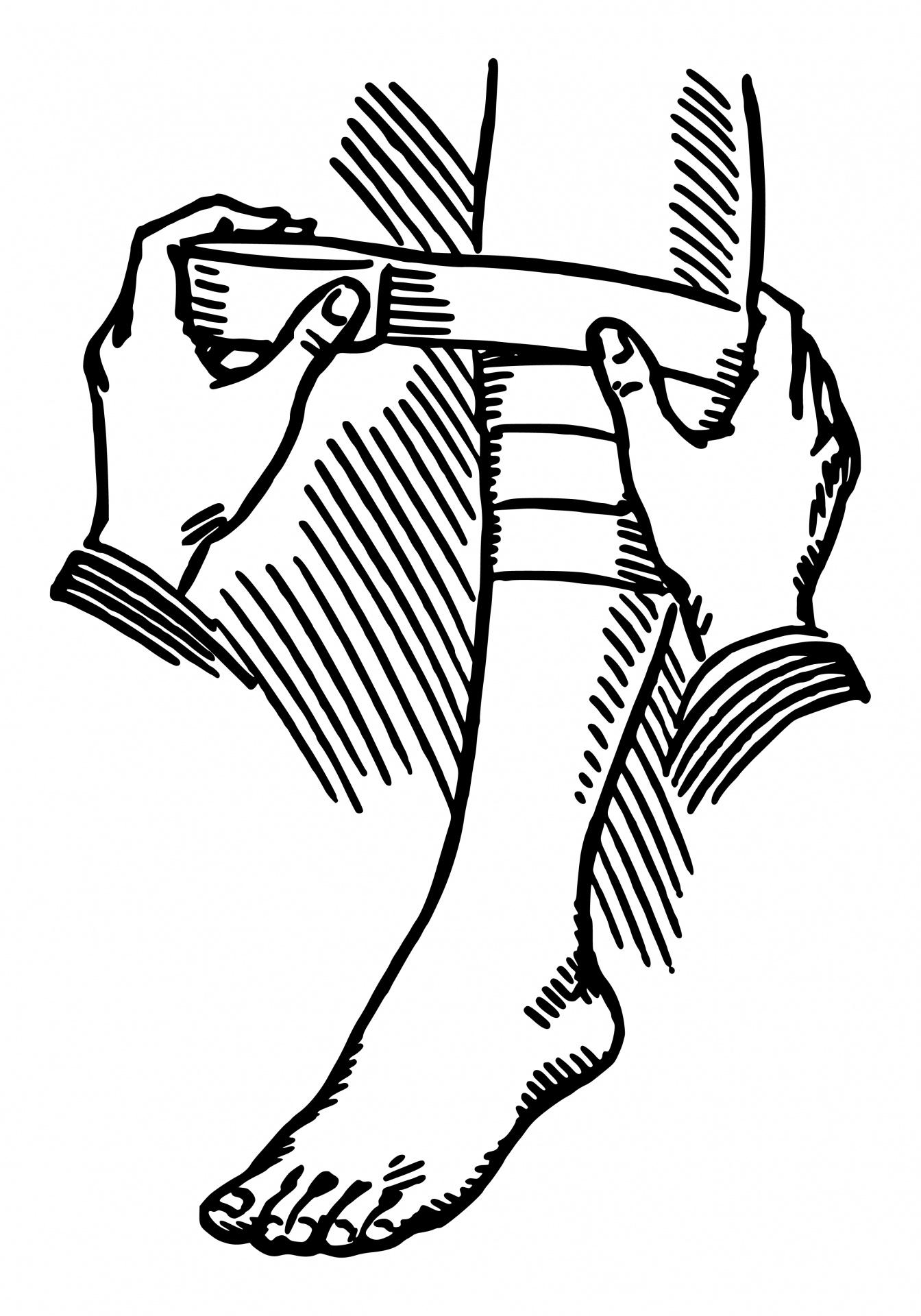 Applying Leg Bandage Illustration Free Stock Photo