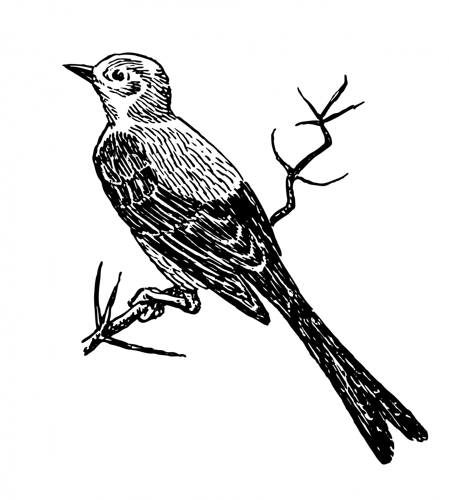 Vogel Clipart Illustration Kostenloses Stock Bild