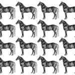 Horse Wallpaper Illustration Free Stock Photo Public Domain Pictures