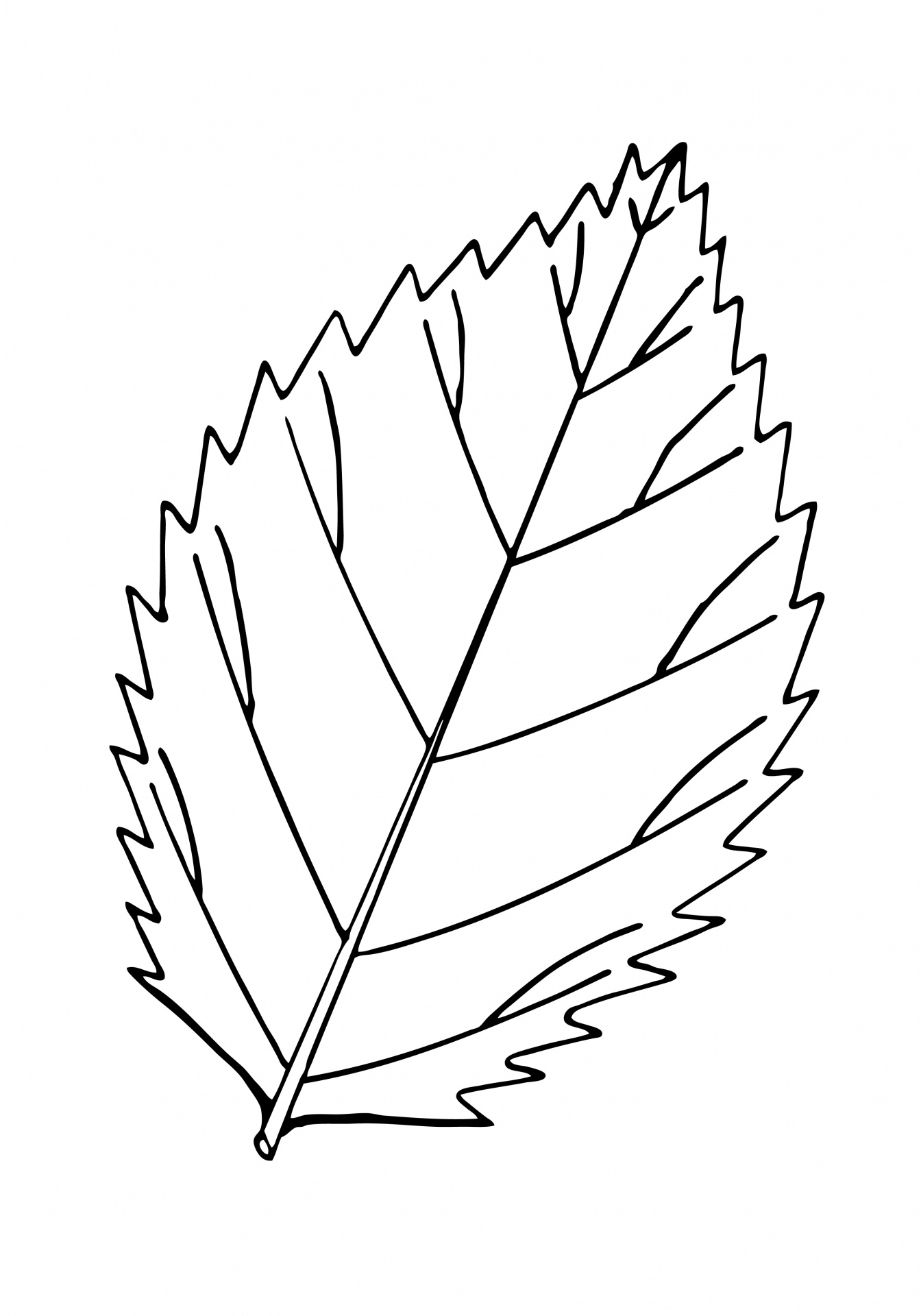 Leaf Outline Illustration Clipart Free Stock Photo