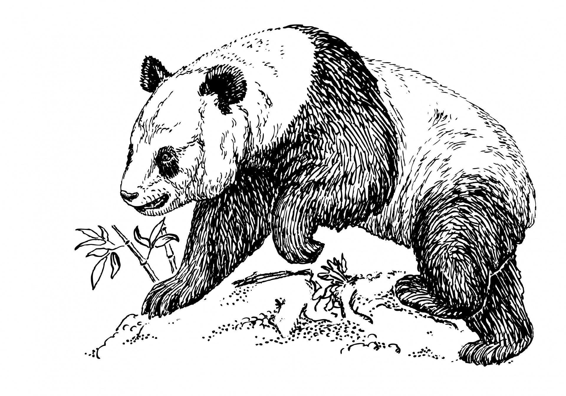 Panda Bear Clipart Illustration Free Stock Photo