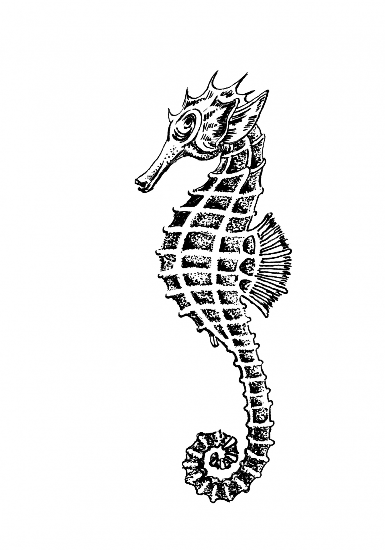 Seahorse Clipart Illustration Free Stock Photo