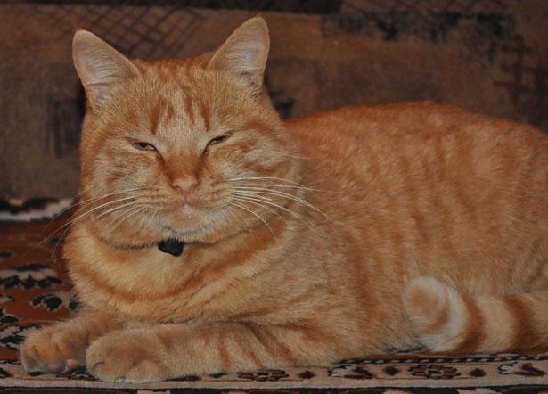 Jengibre gato 2