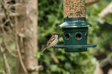 Bird feeding tips winter