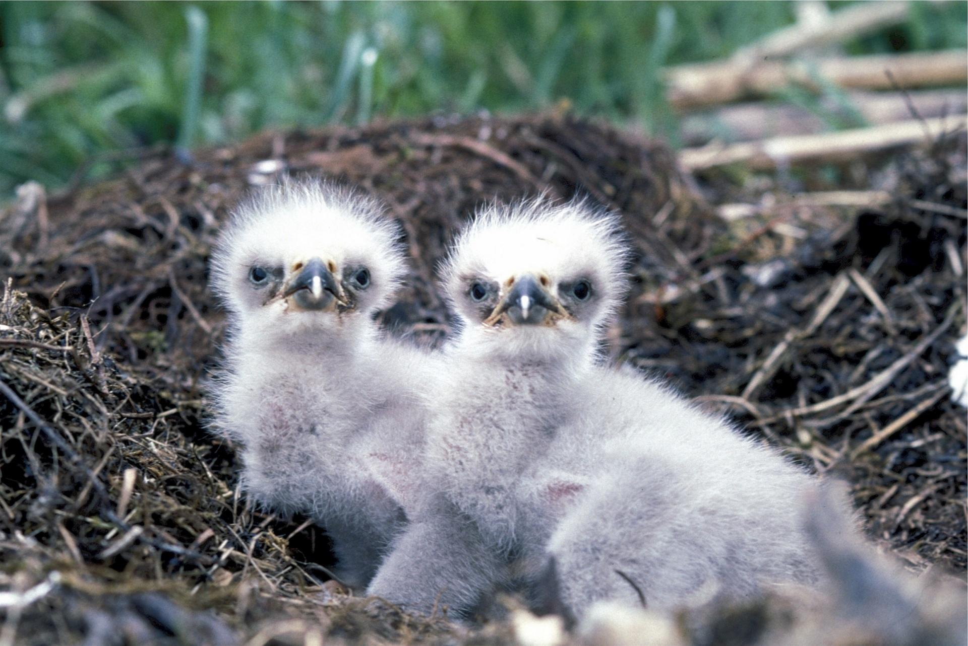 Bald Eagle Day, American Eagle Day, National Bird, Eagle