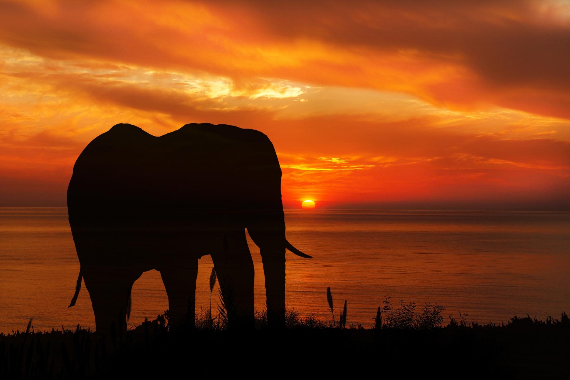 Nature, Elephant, Sunset