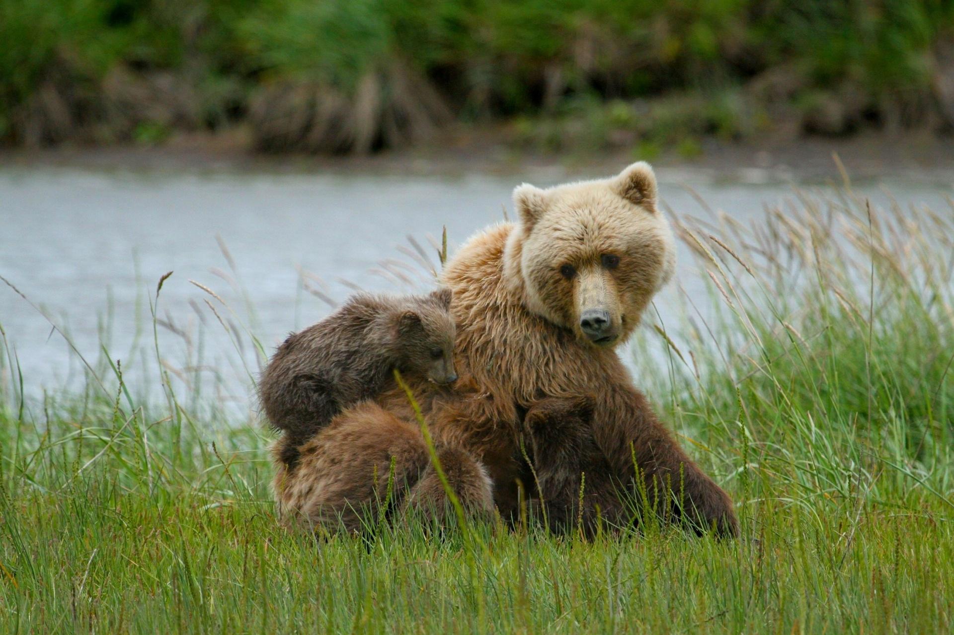 Bears, Life is beautiful