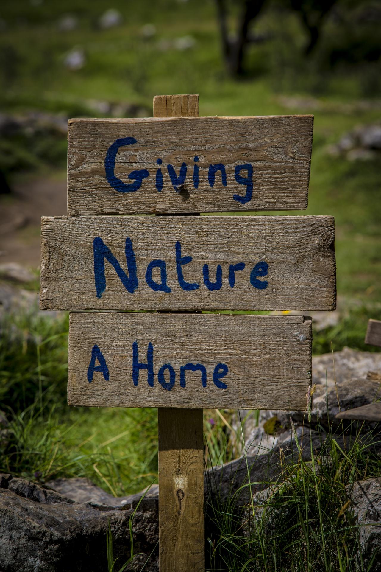 Nature, creation