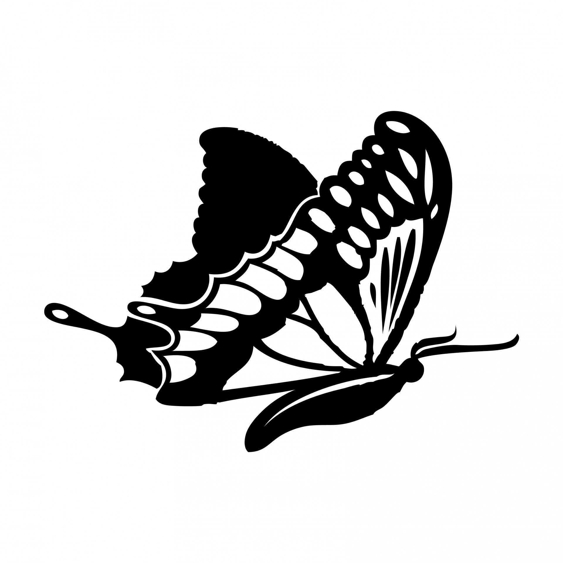 Butterfly Clipart Free Stock Photo