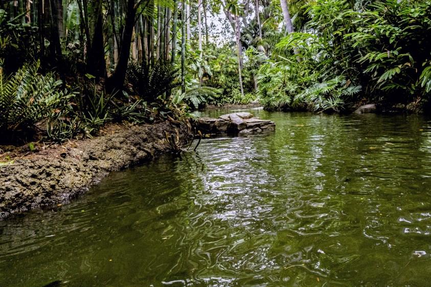 Basic wilderness survival skills for travelers - Ummi Goes Where?