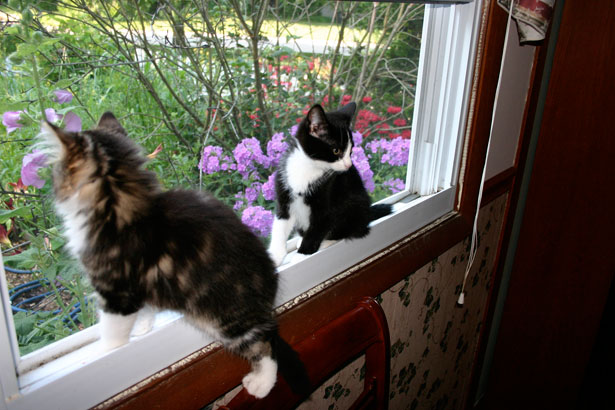 Gatitos en Window