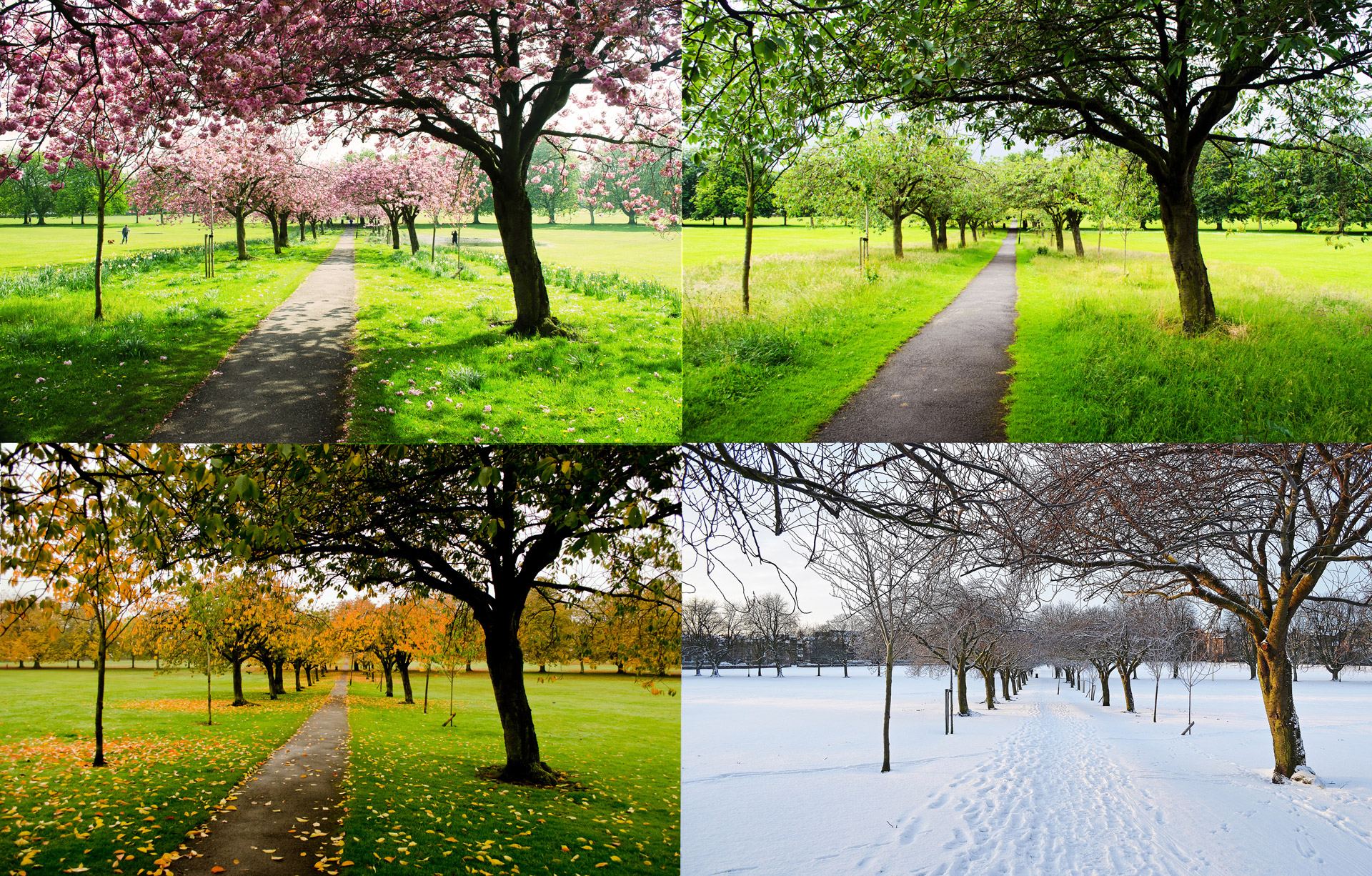 The Four Seasons Free Stock Photo