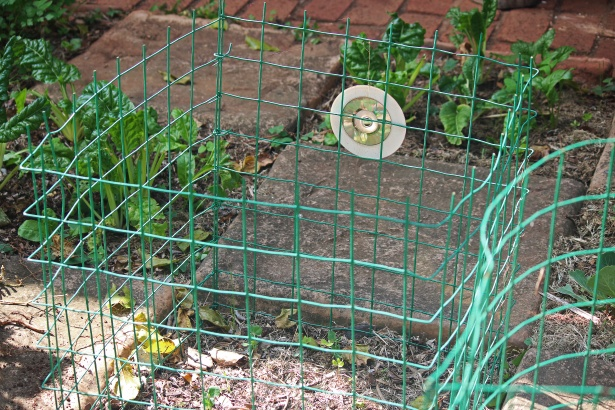 How To Get Rid Of Birds From Garden