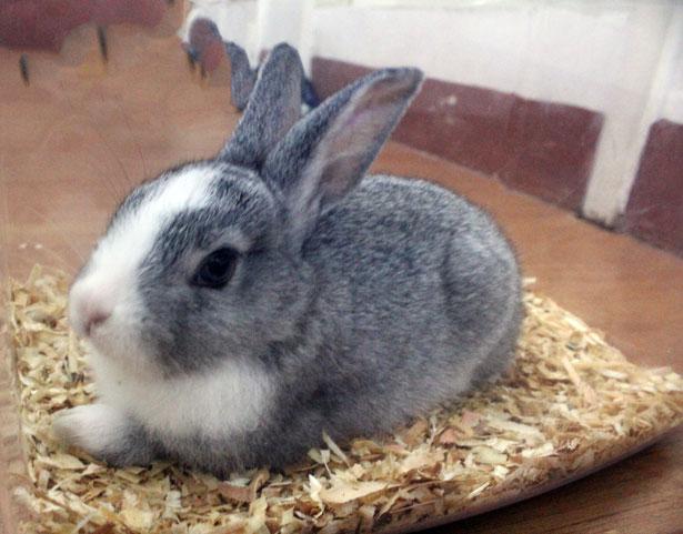 Mi lindo conejito mascota