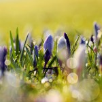 Spring Flowers Free Stock Photo Public Domain Pictures
