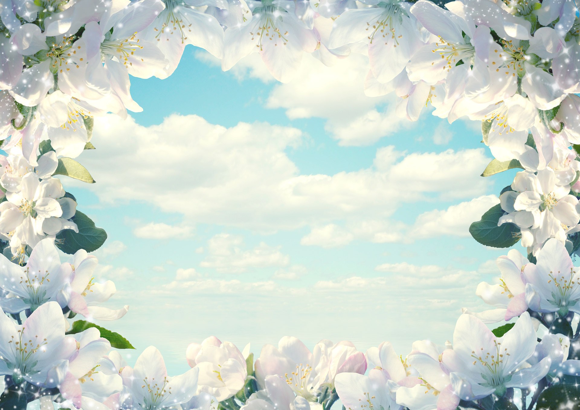 flowers, sky, blooms, blossoms