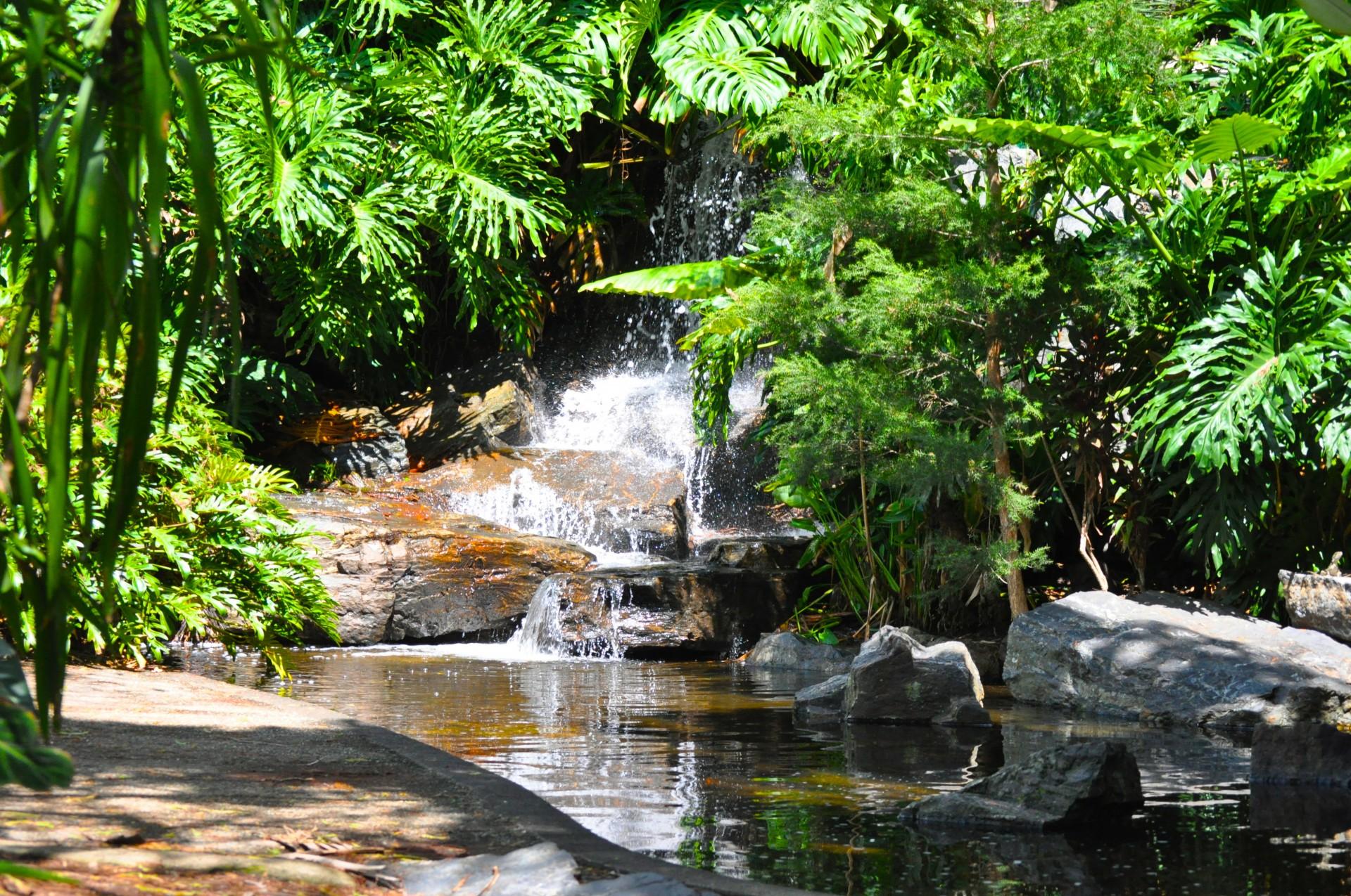 Nature, Water Garden