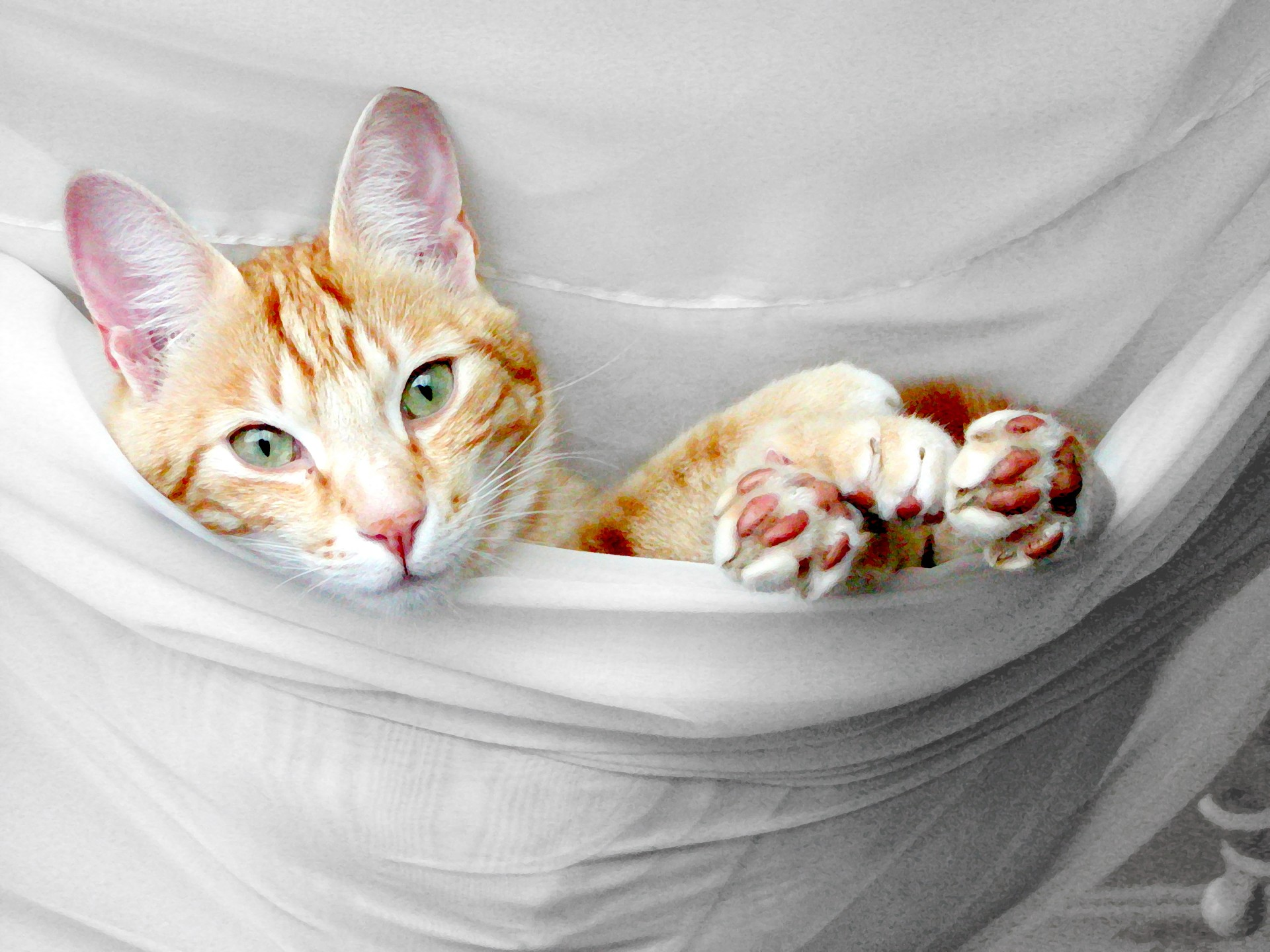 Painting Of Cat In Hammock Free Stock Photo