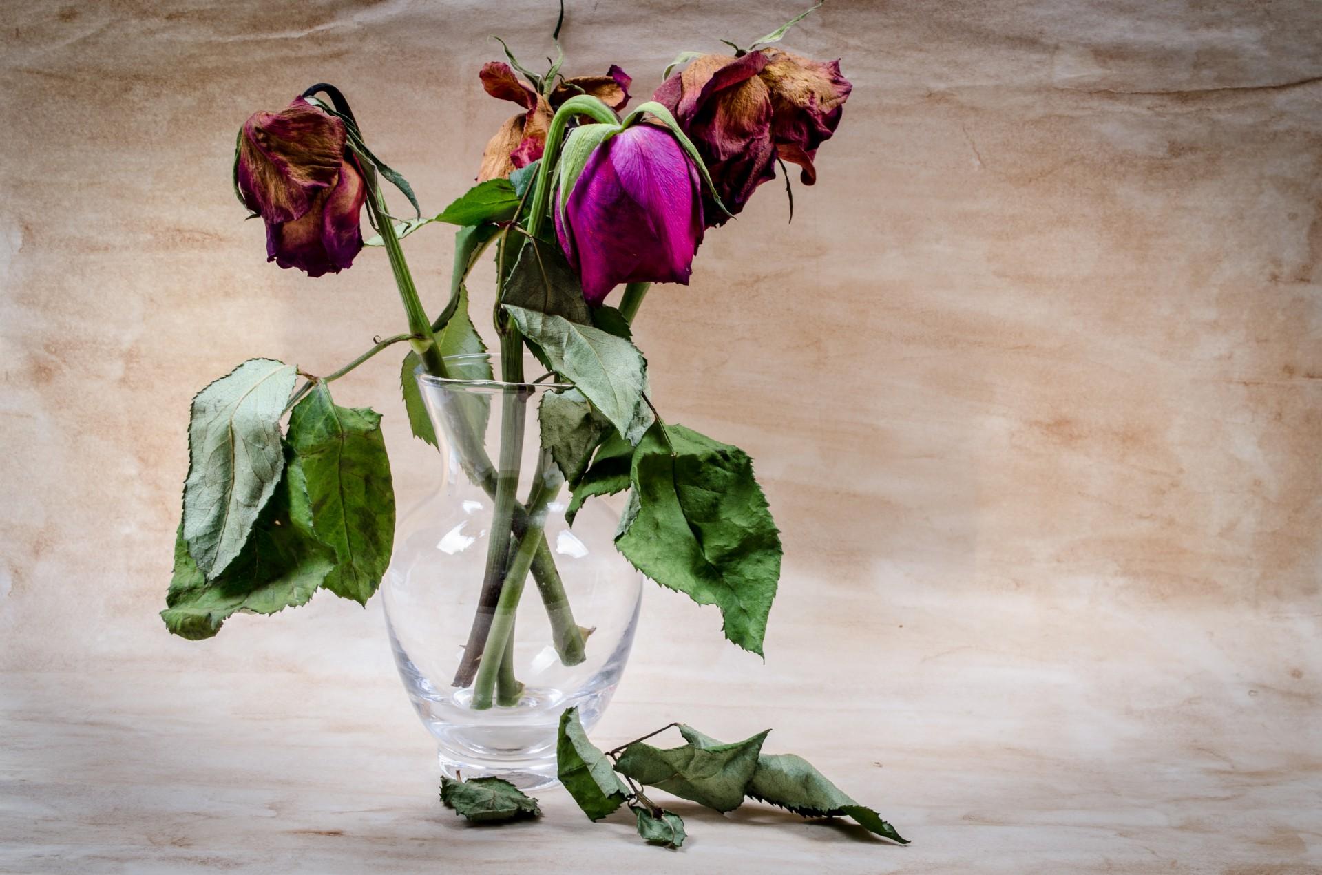 Resultado de imagen de planta muerta