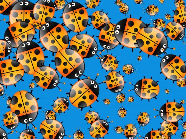 Cartoon Ladybug Wallpaper Free Stock Photo Public Domain