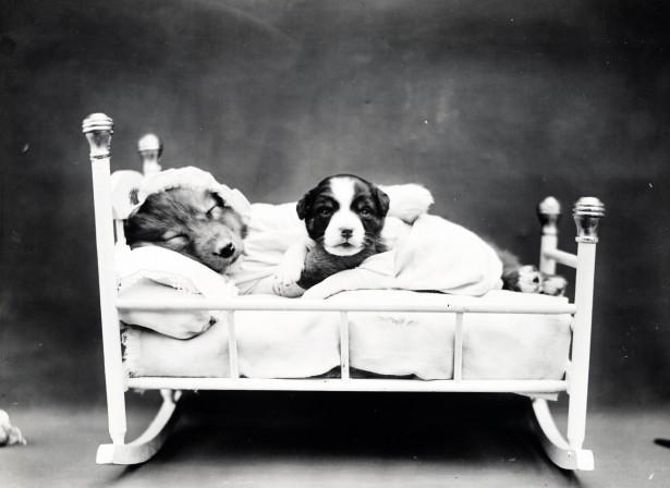 Puppy Bedtime Vintage Photo Free Stock Photo Public