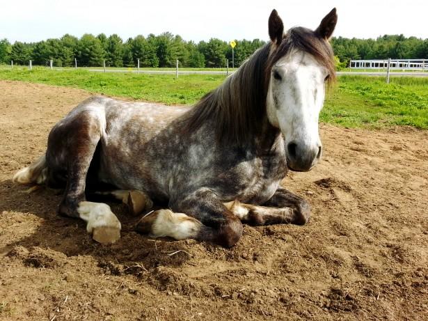 cbd calculator horses