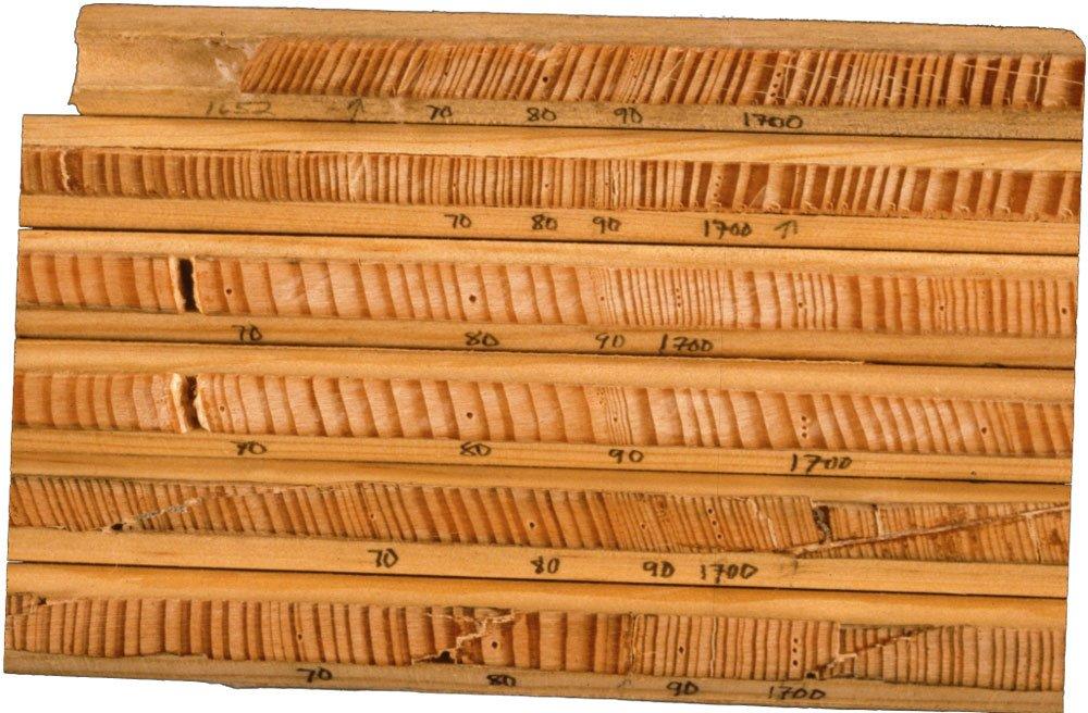 Dendrochronology cores