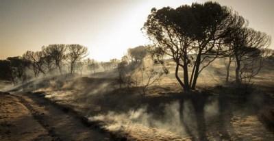 Paraje de Cuesta Maneli tras el incendio declarado el pasado sábado en el paraje 'La Peñuela' de Moguer (Huelva) y que afecta al entorno del Espacio Natural de Doñana. /EFE