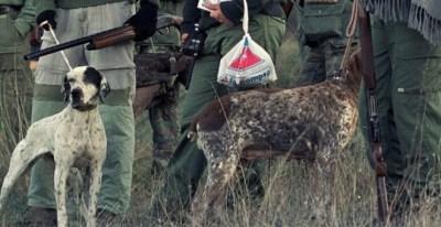 Imagen de archivo de unos perros de caza. EFE