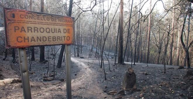 Zonas siniestradas de los montes gallegos, en la aldea de Chandebrito en Nigrán (Pontevedra). - SALVADOR SAS (EFE)