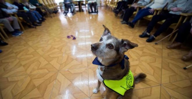 Miko es un perro que llegó a su dueña en una caja de cartón abandonada. EFE