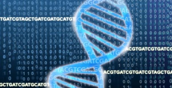 Representación de la cadena de ADN que forma los genes./EMBL