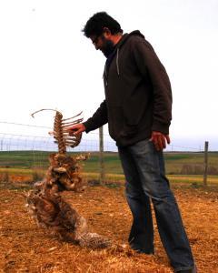El ganadero Fernando Pastor sostiene los restos de una oveja muerta en Armuña, Segovia. LUCÍA VILLA